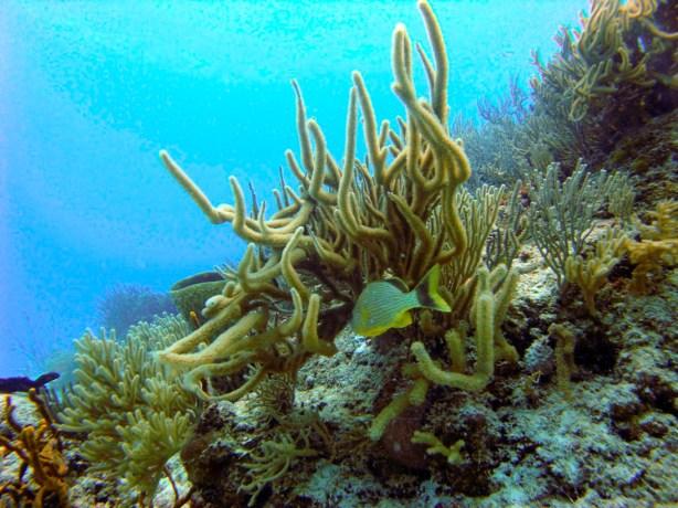 Fondos coralinos en Playa del Carmen. Fotografía de Jordi Ruiz